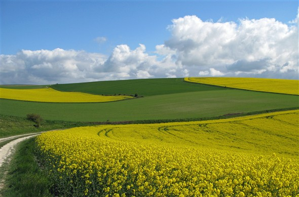 Photo: Illustrative image for the 'THE BEAUTIFUL SOUTH DOWNS ABOVE DENTON' page