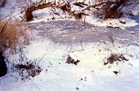 Photo:Frozen duck pond 1998