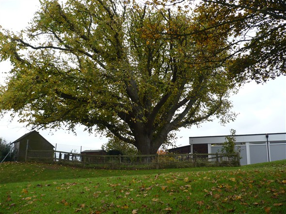 Photo:Oak Tree in Grounds