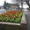 Page link: NEWHAVEN IS BLOOMING